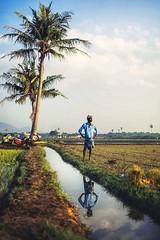 At Ponpadhirkoodam (Akilan T) Tags: sigma35mmart sigma canon canon5dmk3 field irrigation farmer india tamilnadu chengalpattu ponpadhirkoodam chennaiweekendclickers cwc