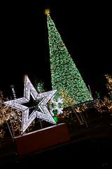 brightlightswindsor5_dec2018 (YenC) Tags: brightlights christmas lights windsor jacksonpark christmastree