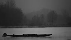 Brume matinale (Un jour en France) Tags: hiver brume barque forêt lac arbrepaysagebrume landscape blancetnoir noiretblancfrance brouillard canoneflenses