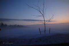 Brume matinale .. (Dare2drm) Tags: hiver winter brume mist fog aube brouillard djfotos sunrise leverdesoleil dawn soleillevant risingsun groupenuagesetciel
