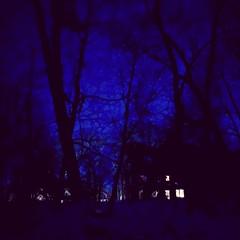 Winter night. Vivid sky.  (32) (newenglandgal) Tags: 365 blue night windows light winter trees silhouette 119in2019 52in2019 52weeks