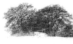 Winter (martin.ostheimer) Tags: lanschdschaft landscape nature natur tree bäume blizard snow schnee schneesturm winter