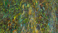 Bildschichten Am Fluss 21 Wieltsee (wos---art) Tags: bildschichten fluss river wasser water unterwasser underwater gestrüpp bäume baum verbrand ausgehöhlt rus äste ufer