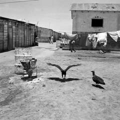 Peru 1952 by Peter Bock-Schroeder (1913-2001 (bockschroeder) Tags: peru 1952 peterbockschroeder photography bockschroederfoundation blackandwhite rolleiflex shootonfilm wanderlust