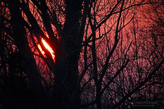 Behind The Trees (Elisa Medeot) Tags: trees alberi red rosso autumn leaves autunno foglie nature natura sunset tramonto winter inverno