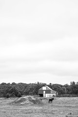 Farm Black and White (adamopal) Tags: canon canon5d canon5dmkiii canon5dmarkiii farm field horse barn camping campsite campingfun ruralmo ruralmissouri mo outdoors outside harshedit monochrome blackandwhite blackwhite black white