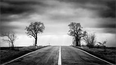 The road (Eva Haertel) Tags: eva haertel canon landschaft landscape schwarzweis sw blackandwhite bw tree baum strase road horizont horizon himmel sky wolken clouds wolkig cloudy silhouette symetrisch symmetric mood tschechischerepublik czechrepublic regen rain