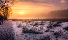 Barrenness (nunoborges73) Tags: sunset dusk norway cold ice winter snow mood fog foggy