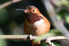 SC_Birds_12-26-18-1