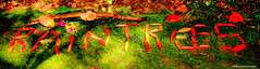 Raintrees Native and Rainforest Gardens, Diamond Beach, NSW (Black Diamond Images) Tags: raintrees raintreesnativeandrainforestgardens diamondbeach hallidayspoint midnorthcoast nsw australia sign leaves elaeocarpusgrandis cymatodermaelegansvarlamellatum cymatodermaelegans name moss
