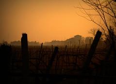 ALBA A PROVA, VERONA (ceriz_83) Tags: prova verona veneto campagna alba marzo passeggiate marcia sunrise