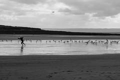 Croyde Bay (Spannarama) Tags: beach coast seaside croydebay croyde northdevon devon uk sand clouds blackandwhite girl running gulls birds seagulls sea