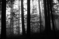 Silence (Leica Monochrome) Tags: blackandwhite blackwhite bw fineartfotografie flickr fog galluspictures kraftort landschaft landscape monochrome monochrom monocromatico ostschweiz pictures schwarzweiss wald hemberg nebel silence forest gegenlicht nikond800e