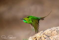 IMG-20180323-WA0016 (TARIQ HAMEED SULEMANI) Tags: sulemani tariq tourism trekking tariqhameedsulemani winter wildlife wild birds nature nikon