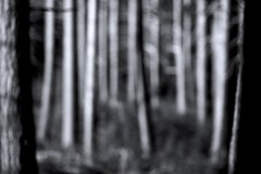 Into the woods (Michael Degenhart) Tags: woods blackandwhite shadow shadows light lights lightsandshadows abstract impression monochrome mystery amsterdam forest