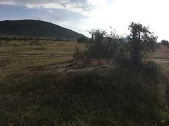 IMG_1548 (suuzin) Tags: masai mara safari