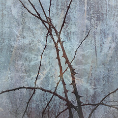 11/365 To the Point (Jane Simmonds) Tags: abstract iphone multipleexposure thorns winter 3652019 bramble forestofdean