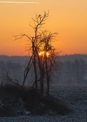 On top of the world (mirosławkról) Tags: silesia sunrise sky orange tree winter frost