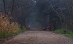 Esperando el verano (explore 261) (pascual 53) Tags: frio niebla laguna canon 7d 50mm largaexpo humedad invierno colores paseo