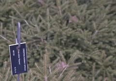 Picea abies 'Repens', 2019 photo (F. D. Richards) Tags: harpercollectionofraredwarfconifers hiddenlakegardens tiptonmi hri bedi michigan usa
