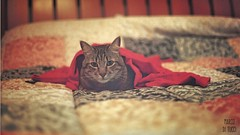 My Cat Oscar 🐈🐱 (Venom Marco) Tags: cat catlife mycat lomography lomo canont70 animal colors canon iso400