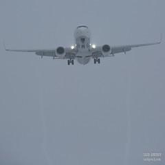 H18A9118 (Said Aminov) Tags: aviation aircraft avgeek airport vnukovo vko uuww moscow russia boeing b737 winter snow