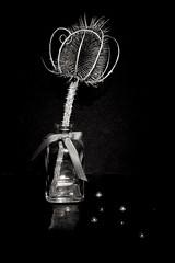 Week 7 Still Life (Carol Dunham) Tags: projectsunday stilllife