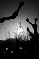 Modern Art (Garry Shu) Tags: french france blackwhite bw nb noirblanc sun light natural tree trees arbres arbre nikon nikond750 d750 tamron 1735mm lumière art instagram street photography outside nature sky soleil blackandwhite