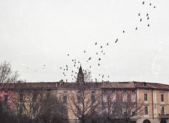 Porta Romana (AIeksandra) Tags: 35mm film analog composition birds dof pov cityscape streetphotography streetshot cremona italy2019 lombardia pianurapadana winter moody sky architecture canonae1program canon50mm january2019