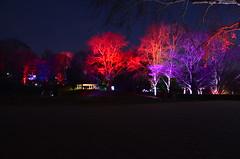 Parkleuchten Gruga Park Essen (bunkertouren) Tags: 2019 essen gruga leuchten parkleuchten park licht lichter natur outdoor nature light night lampe lampen fest lichterfest beleuchtung grugapark nacht naturschauspiel naturereignis lichtspiel lichtspiele lichterspiel lichterspiele