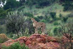 Pilanesberg National Park, North West, South Africa