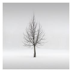 Lost in Fog (Vesa Pihanurmi) Tags: tree foggy mist grey branches minimalism minimalistic winter snow nature finland espoo