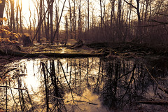 Swamp (roland_tempels) Tags: water nature wood luxembourg trees reflectons naturereserve supershot sky sunlight