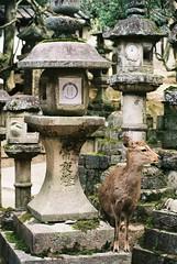 Stone Lantern Deer (GingerKimchi) Tags: nara osaka japan travel nature asia film 35mm fujifilm canon deer canona1 2019 spring february march