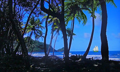 French Polynesia (Jacques Rollet (Little Available)) Tags: sea mer tree arbres sailship vague wave palmier seascape