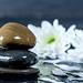 Wet dark stones with chrysanthemum flowers