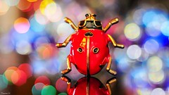 Multicoloured - 6565 (ΨᗩSᗰIᘉᗴ HᗴᘉS +50 000 000 thx) Tags: multicolre multicolores multicolored color macro lookingcloseonfriday bokeh bug belgium europa aaa namuroise look photo friends be yasminehens interest eu fr party greatphotographers lanamuroise flickering