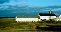 barns (bluebird87) Tags: barns farm dx0 c41 epson v800 film nikon f5 lightroom kodak portra