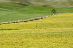 Minimal in Val d'Orcia - Siena (Darea62) Tags: tree fields landscape nature countryside tuscany toscana sanquiricodorcia paesaggio hills outside