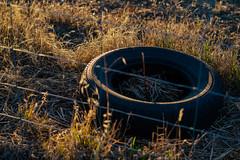 """Tyred."" (ThyNameIsBlair) Tags: australia outback bendigo farmlife オーストラリア アウトバック ベンディゴ 牧場ライフ"