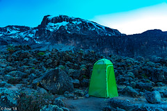 _FOU9623.jpg (Murray Foubister) Tags: 2018 gadventures spring mountainsm flora travel treking africa tanazania