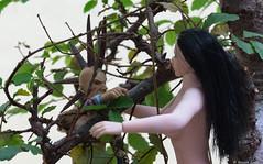 La rencontre  /  The encounter (BenoitGEETS-Photography) Tags: jeaneude midori rencontre encounter figurine toys a6000 sony jouet bonsaï 112 punk tendresse tender sylvidre sylphe sylve tenderness