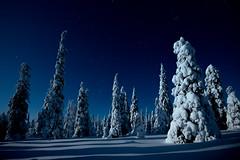 Winter Constellations (MrBlackSun) Tags: winter constellation pleaides orion athena rigel betelgeuse taurus aldebaran nikon d850 finland frozen forest riisitunturi national park night sky stars nightsky starlovers