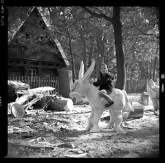 Bronica SQ-A-055-012 (michal kusz) Tags: bronica sqa zenzanon 110mm ilford hp5 800 ilfosol 114 epson v600 bw blackandwhite film frame format forest iso