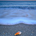 Early morning waves and shell on Venice Beach, Venice, Florida