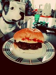 For me? (Ayana Koek) Tags: hamburger dog amstaff staffy yummy