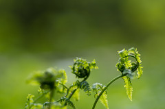 Macro (Tashata) Tags: macro nature outdoor beautiful botanical bright bokeh colors closeup plant pentax green yellow pentaxk01 smcpentaxdfamacro100mmf28wr