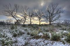 Five trees killed by fire - Hollows (ArtGordon1) Tags: hollowpond hollowponds leytonflats deadtrees london england uk winter january 2019 davegordon davidgordon daveartgordon davidagordon daveagordon artgordon1 trees
