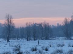 Just a hint of the sun (Marit Buelens) Tags: landscape landschap belgië belgium vlaanderen westvlaanderen flanders brugge bruges assebroek nature naturereserve natuurgebied knotwilg willow pollardwillow