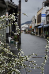 20190319a73_5872 (Gansan00) Tags: lce7m3 α7ⅲ sony japan 大分県 oita 日本 usukishi 臼杵市 landscape snaps ブラリ旅 03月 fe24105f4